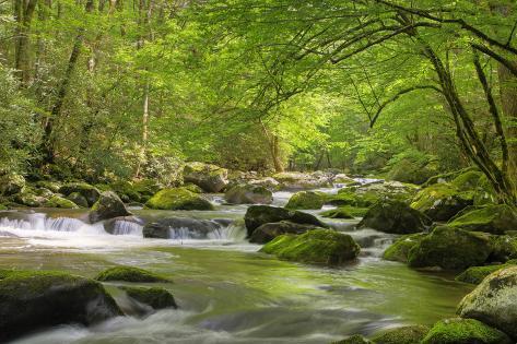 Cascading Creek, Great Smoky Mountains National Park, Tennessee, USA Premium fotografisk trykk