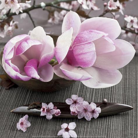 Magnolia Kunsttrykk