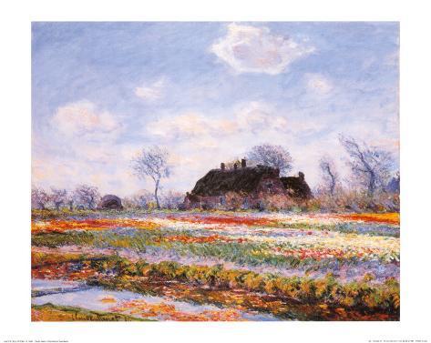 Tulip Fields at Sasenheim Kunsttryk