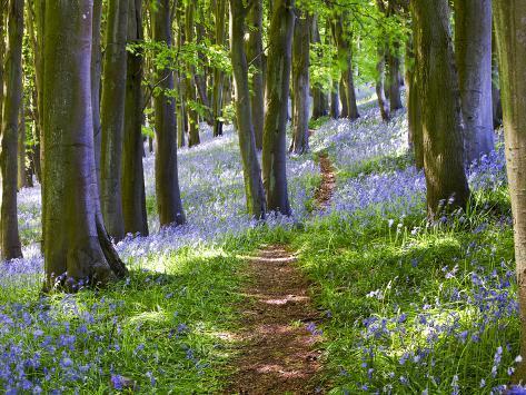 En tur i skogen Fotografisk trykk
