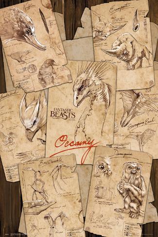 Fantastic Beasts- Field Notes Plakat
