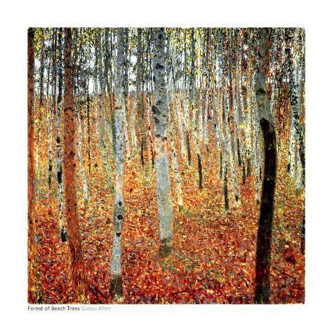 Skog med bøketrær, ca.1903 Kunsttrykk