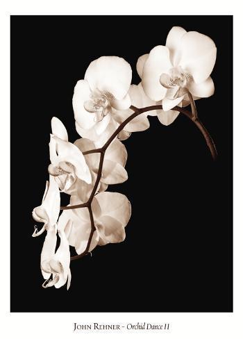 Orchid Dance II Kunsttrykk