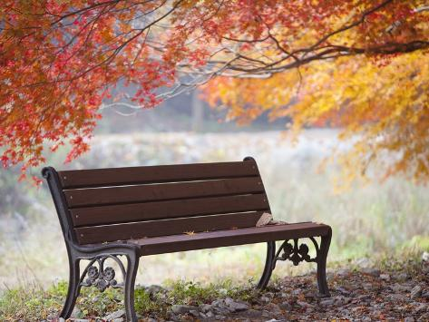 Lonely bench under the autumn tree Fotografisk tryk