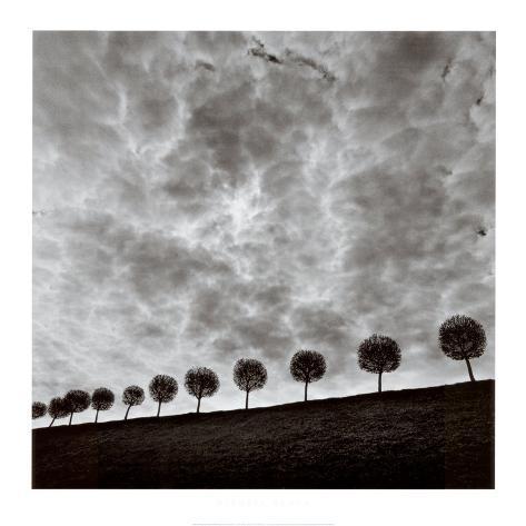 Ten and a Half Trees, Peterhof, Russia, 2000 Kunsttrykk
