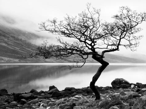 Enslig tre ved kysten av Loch Etive, Highlands, Skottland, Storbritannia Premium fotografisk trykk