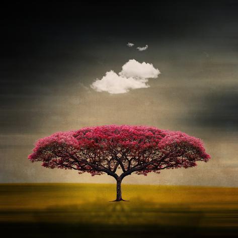 Medusa Cloud Fotografisk trykk