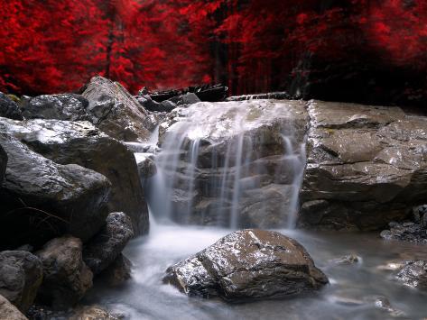 Rød visjon Fotografisk trykk