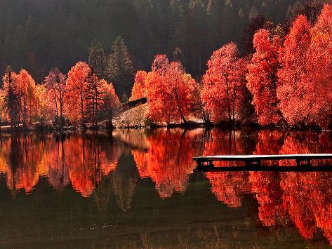 Trær kontra trær Premium fotografisk trykk