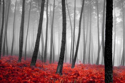 Autumn Woods Fotografisk trykk