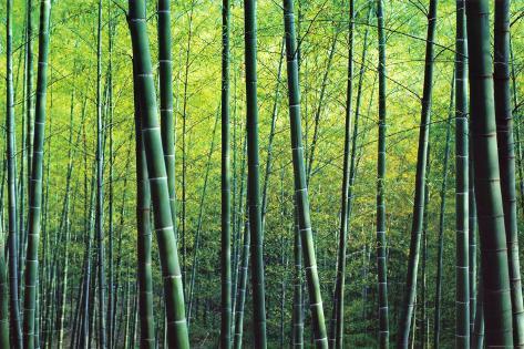 Bambuslunden Kunsttryk