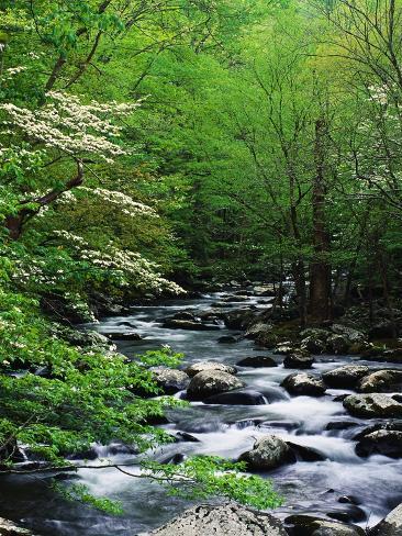 Stream in Lush Forest Fotografisk trykk