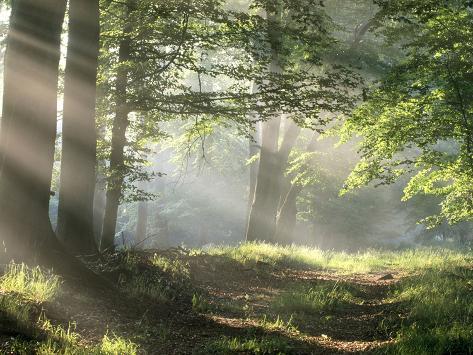 Skogssti Kunsttrykk