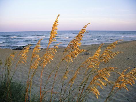Strandscene med fladaks Fotografisk tryk