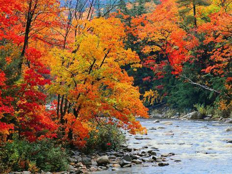 Stream in Autumn Woods Kunsttrykk