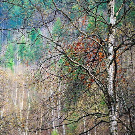 Kootenay Spring Fotografisk trykk