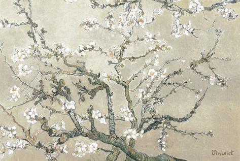 Mandelgrener i blomst, San Remy, c. 1890 (brun) Kunsttrykk