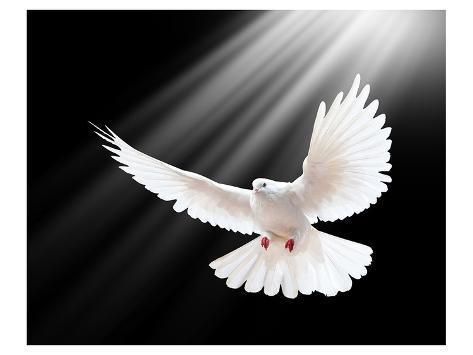 A Free Flying White Peace Dove Kunstdruck