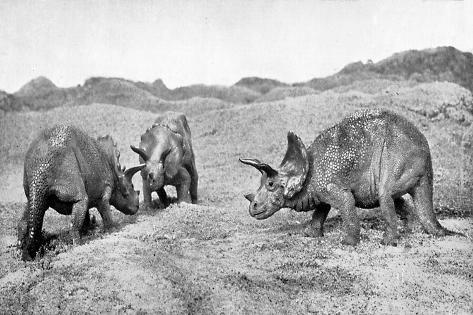 A Group of Triceratops, 20th Century Giclée-Druck
