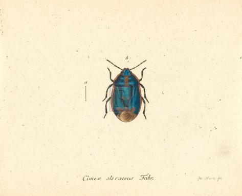 Cimex Oleraceus Giclée-Premiumdruck