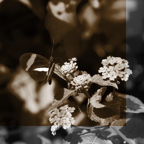 Butterfly Study III Fotografie-Druck