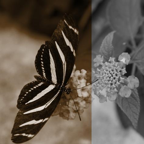 Butterfly Study IV Fotografie-Druck