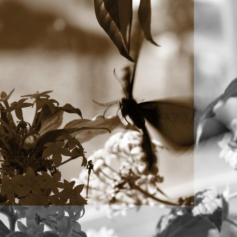 Butterfly Study V Fotografie-Druck