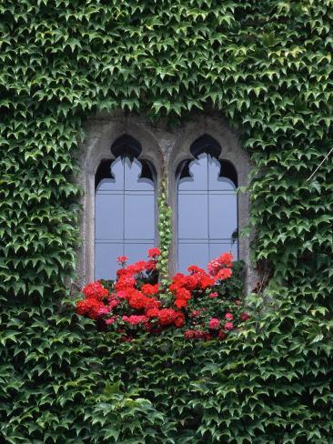 Window of Regensburg Town Hall Fotografie-Druck