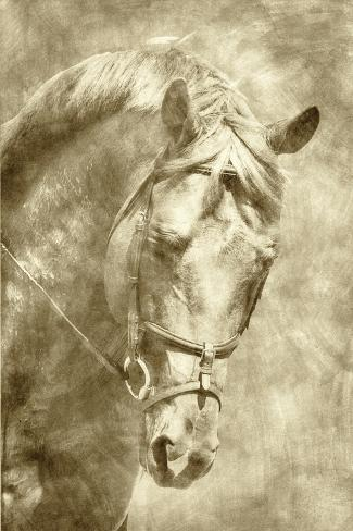 Diego I Kunstdruck