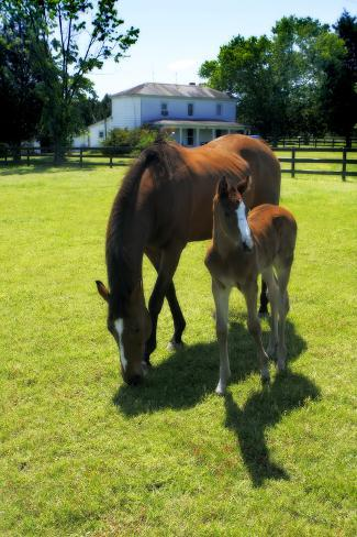 Mare and Foal II Fotografie-Druck