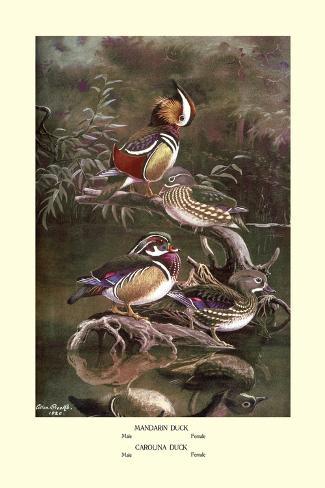 Mandarin and Carolina Ducks Wandtattoo