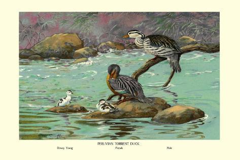 Peruvian Torrent Duck Wandtattoo