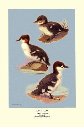 Three Downy Young Ducks Wandtattoo