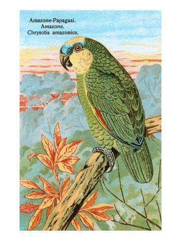 Amazon Parrot Kunstdruck