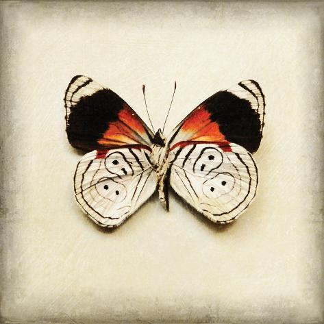 Butterfly 12 Kunstdruck