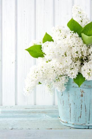 White Lilac Spring Flowers In A Blue Vase Fotografie Druck Von Anna