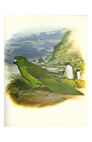 Antipodes Green Parakeet no. 241 Kunstdruck