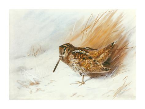 A Woodcock Among Reeds Giclée-Premiumdruck