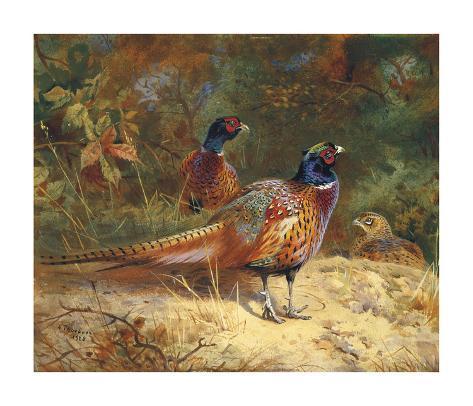 Cock and Hen Pheasants in the Woodlands Giclée-Premiumdruck