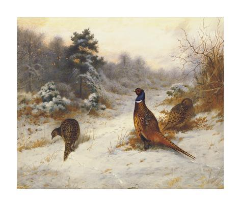 Cock and Hen Pheasants in Winter Giclée-Premiumdruck