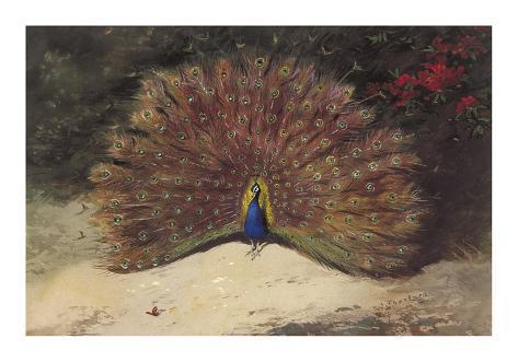 Peacock Giclée-Premiumdruck
