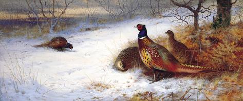 Pheasants and Hens in Snow Giclée-Premiumdruck