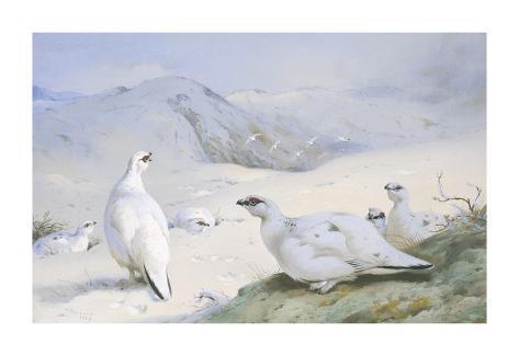 Ptarmigan in Winter Giclée-Premiumdruck