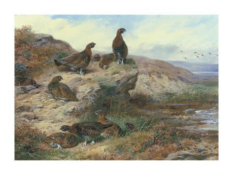 Red Grouse Giclée-Premiumdruck