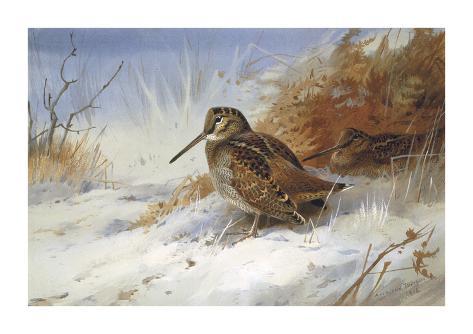 Winter Woodcocks Giclée-Premiumdruck