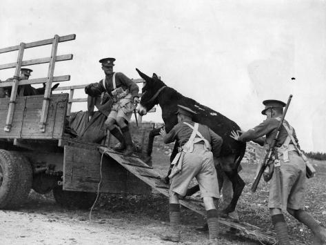 Army Donkeys Fotografie-Druck