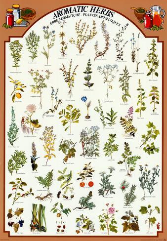 Aromatische kruiden posters bij - Liste des plantes medicinales ...