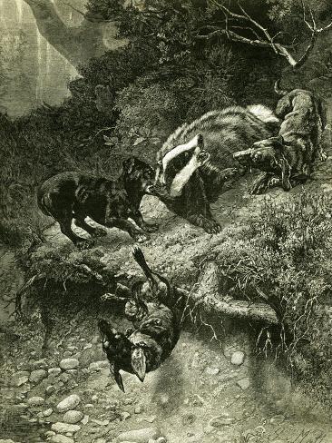 Badger Austria 1891 Giclée-Druck