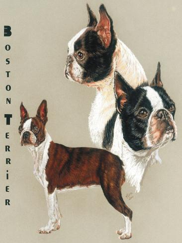 Boston Terrier Giclée-Druck
