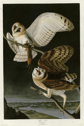 Barn Owl Giclée-Druck